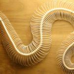 Anatomia funzionale del rachide